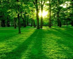 绿色发展成林产工业未来趋势 助力森林