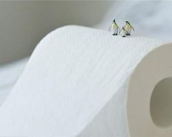 港媒:中国在造纸术上再获突破 粉煤灰可代替部分木浆